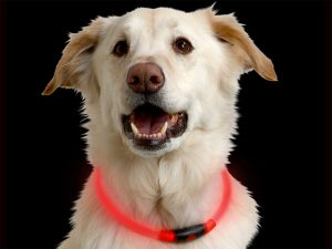 Dog Accessories that light up and can be worn around your dog's neck like a collar.