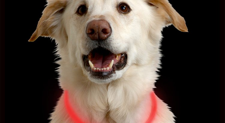 Glow in the dark Nite Ize dog collar
