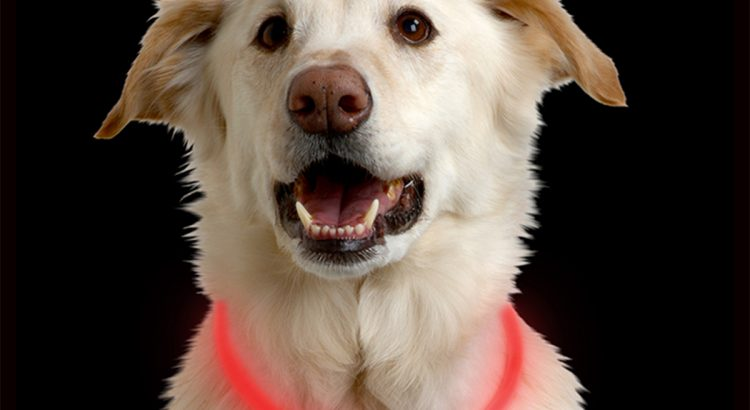 Nite Ize lightup dog collar